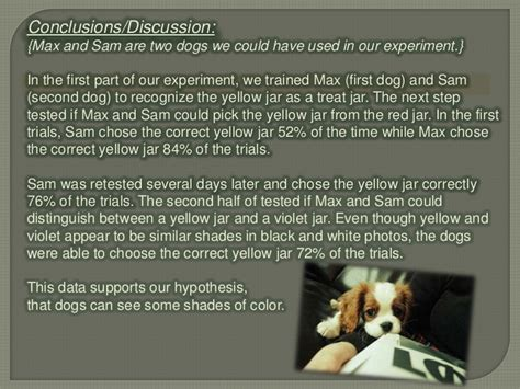 Are Dogs Color Blind Experiment are dogs color blind