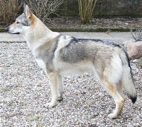 are wolves dogs progressive charlestown charlestown tapas