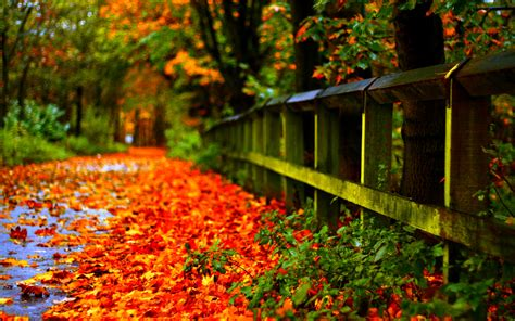 autumn leaves red desktop wallpaper hd