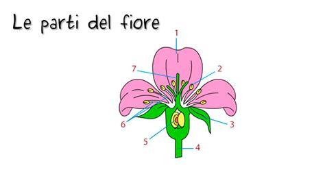 le parti fiore vocabolario illustrato le parti fiore