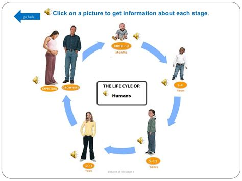 this diagram of the human cycle shows that image gallery human cycle chart