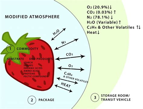 Modified Atmosphere Packaging Market Size by New Methods To Add Shelf And Storage Discovery Organics