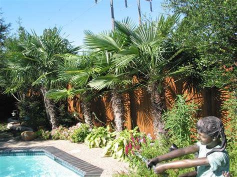 tropical backyard landscaping tropical gardens in garden ideas gardens creative and windmills
