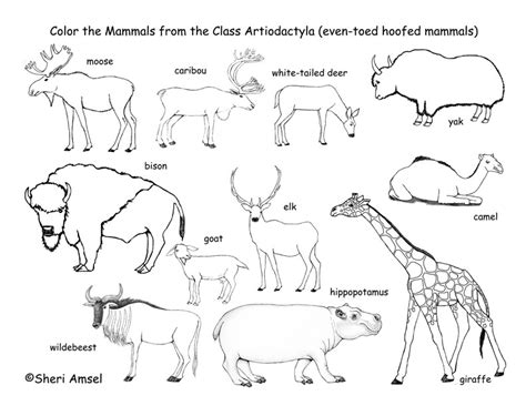 Mammals Coloring Pages deer camels hippos etc even toed hooved mammals