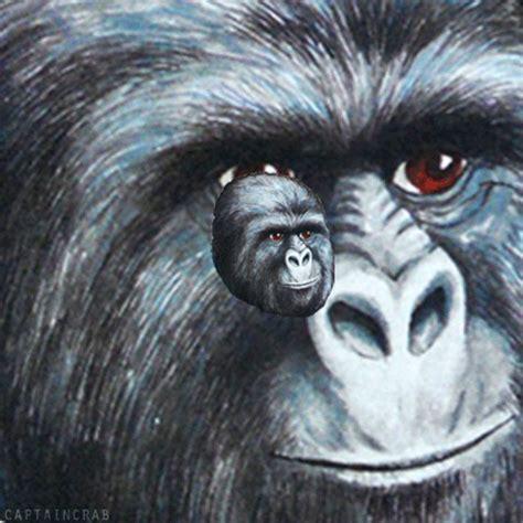 Gorilla Munch Meme - gorilla munch on tumblr
