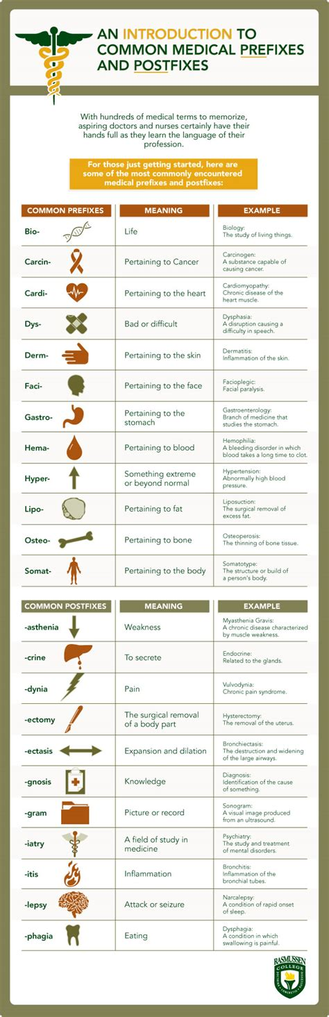 medical terms common medical prefixes and postfixes infographics bin
