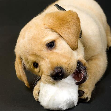 can dogs get hairballs can dogs get hairballs