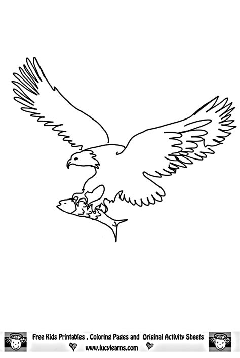 eagle coloring pages bird coloring pages animals eagle coloring pages bird coloring pages animals