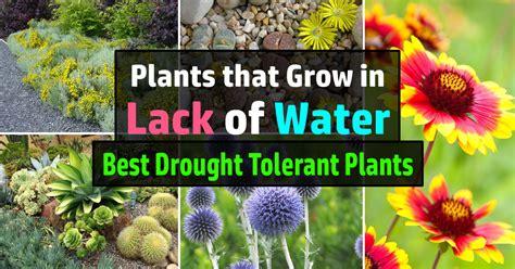 drought tolerant plants  grow  lack  water