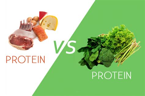 vegetables w protein the analogy for animal protein vs plant protein