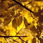 autumns  stand flickr photo sharing