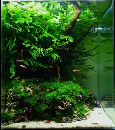 aquascape substrate nano aquascapes aquascaping aquarium
