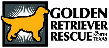 golden retriever rescue dallas tx giving day booster golden retriever of