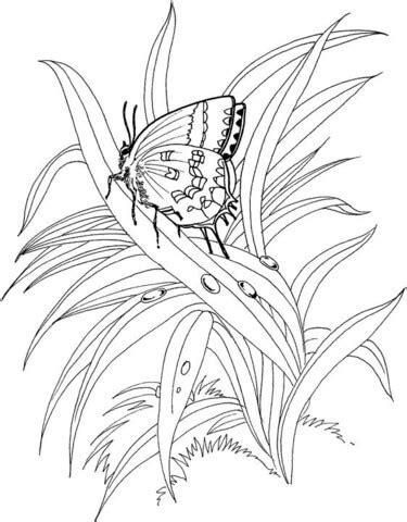 Standing Plant Medium ausmalbild schmetterling im gras ausmalbilder kostenlos