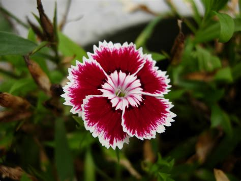 floral pictures himalayan flower 5 ag world