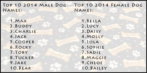 top 10 most popular dog names most popular dog names of 2014 paw print