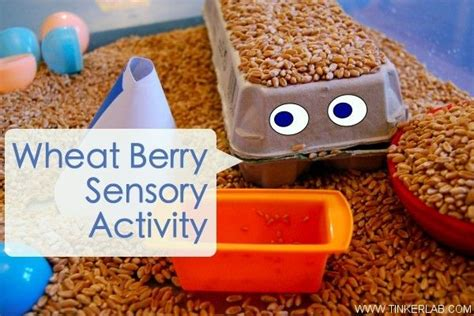 materials for sensory table 72 best images about sensory table ideas on pinterest