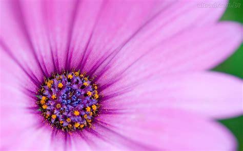 Meu Verdadeiro Eu Flor Roxa Purple Flower Backgrounds Graphicpanic