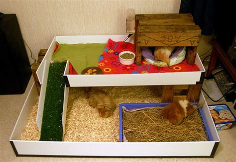 Guinea Pig Houses by New Indoor Guinea Pig House From Left Right