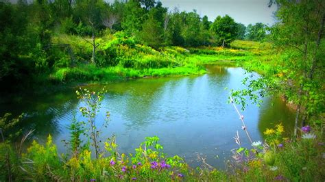 Maskara Ponds 2 In 1 2 hour relaxing pond with bird song soothing sounds of nature