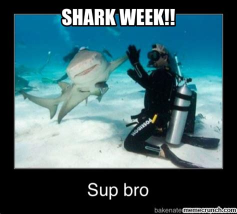 Meme Shark - shark week