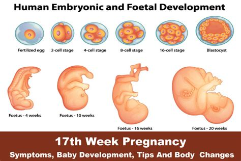 how can you improve looks in one week two weeks pregnant symptoms johny fit
