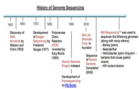 Essay About The Human Genome Project by Human Genome Project Literature Essays