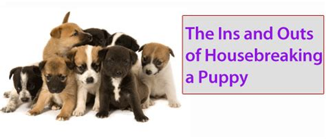house breaking a puppy 101 housebreaking a puppy breeds picture