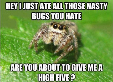 Cute Spider Meme - spiders housekeeping friend or foe london cleaning