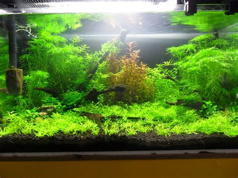 Aquascape How To by Aqua Nyh Aqua Aquascape