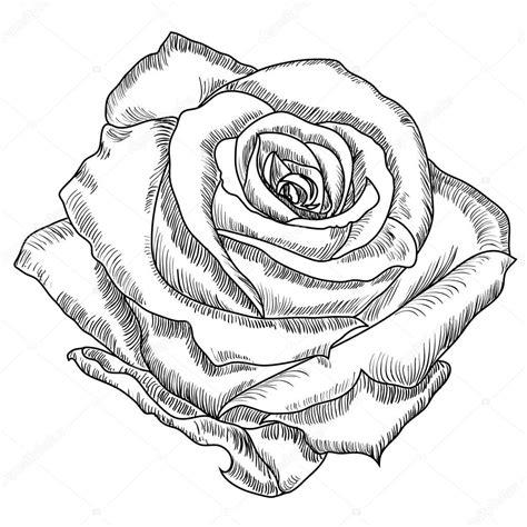 sketchbook vector szkic r 243 ży kwiat grafika wektorowa 169 vitasunny 64672661