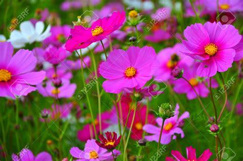 Pink Flower Garden Beautiful Pink Flower Garden Pink Flower Garden Alices Garden Chsbahrain