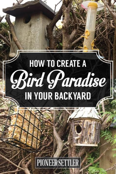 backyard bird baths 17 best ideas about backyard paradise on pinterest