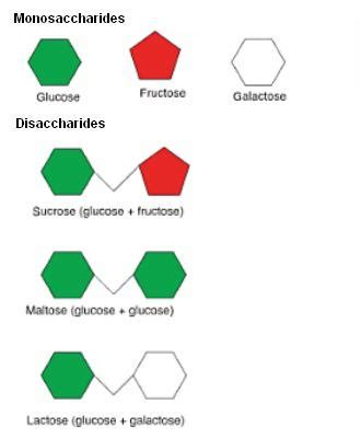 carbohydrates shape carbohydrates in food chemistry tutorvista