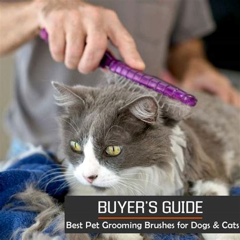best dogs for cats the 10 best pet grooming brushes for all dogs cats 2016 2017