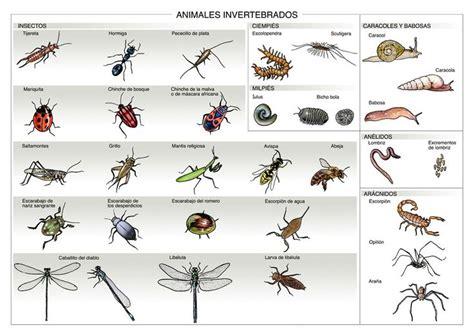imagenes animales invertebrados infograf 237 a de los animales invertebrados pinteres