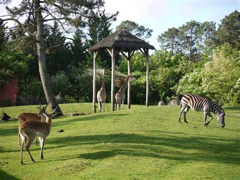 Zoo Search Zoo De Bordeaux Pessac Bordeaux Tourism Hotels Bordeaux Travel Ideas In Bordeaux