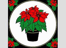 Poinsettia a Christmas Symbol at Santa's Net. Mothers Birthday Gift