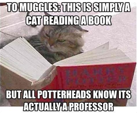 Reading Book Meme - meme cat reading book