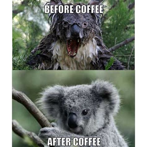 Angry Koala Meme - memes to make you smile corner of confessions