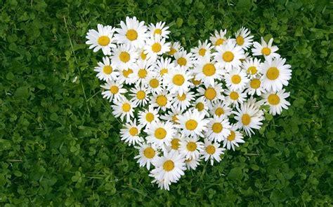 imagenes flores en hd coraz 243 n de flores 1680x1050 hd fondoswiki com