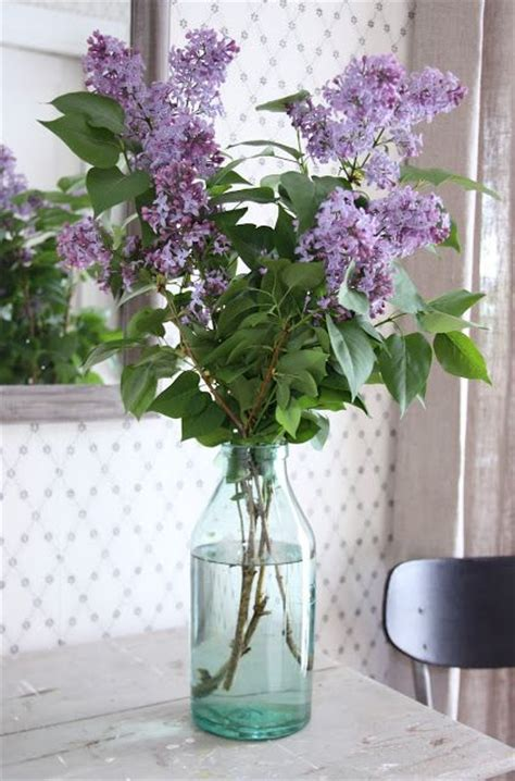 Yuri Glass Cleaner Fresh Lilac 1020 best images about lilacs on cottages