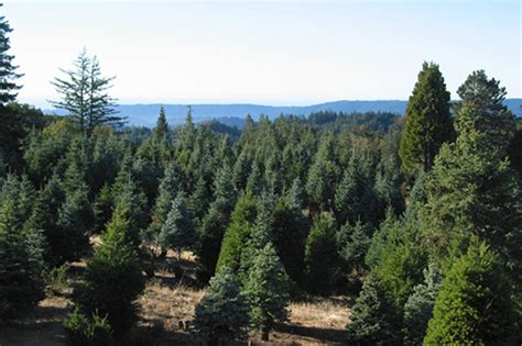 christmas tree farms mobile the history of the tree farm and where to find the tree mobile ranger