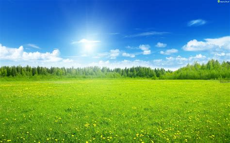 imagenes de verdes praderas zdjęcie ukwiecona łąka niebo lasek