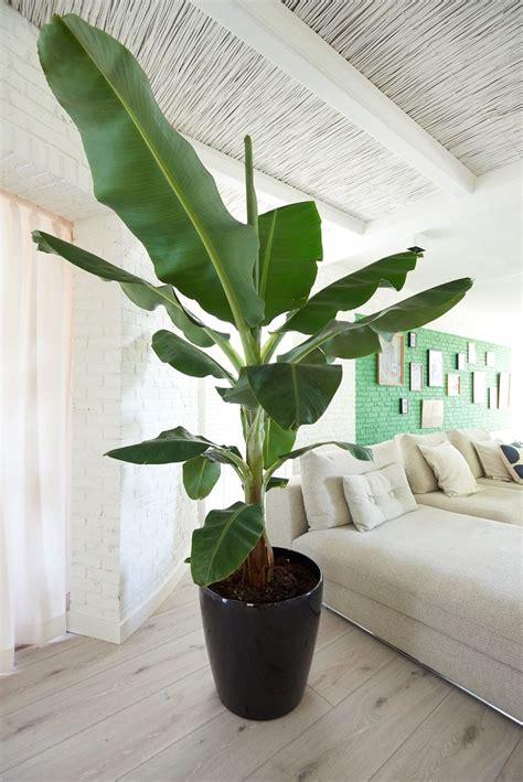 Kleine Kamerplanten Weinig Licht by 25 Beste Idee 235 N Kamerplanten Op