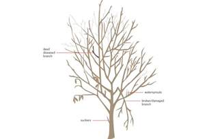 When Is The Best Time To Prune Fruit Trees - how to prune your fruit trees modern farmer