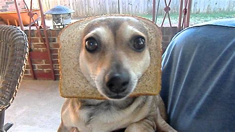 inbred dogs inbred high