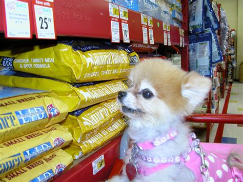 pomeranian foods to eat comparison shops for foods petmeds 174 pet health