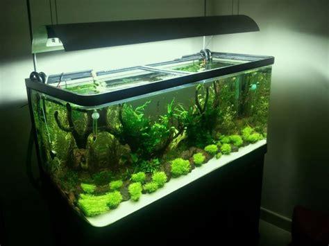 felicia aqua design aquascape bekasi allvians pembuatan kitchenset perquet