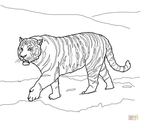 coloring pages siberian tiger siberian or amur tiger coloring page free printable